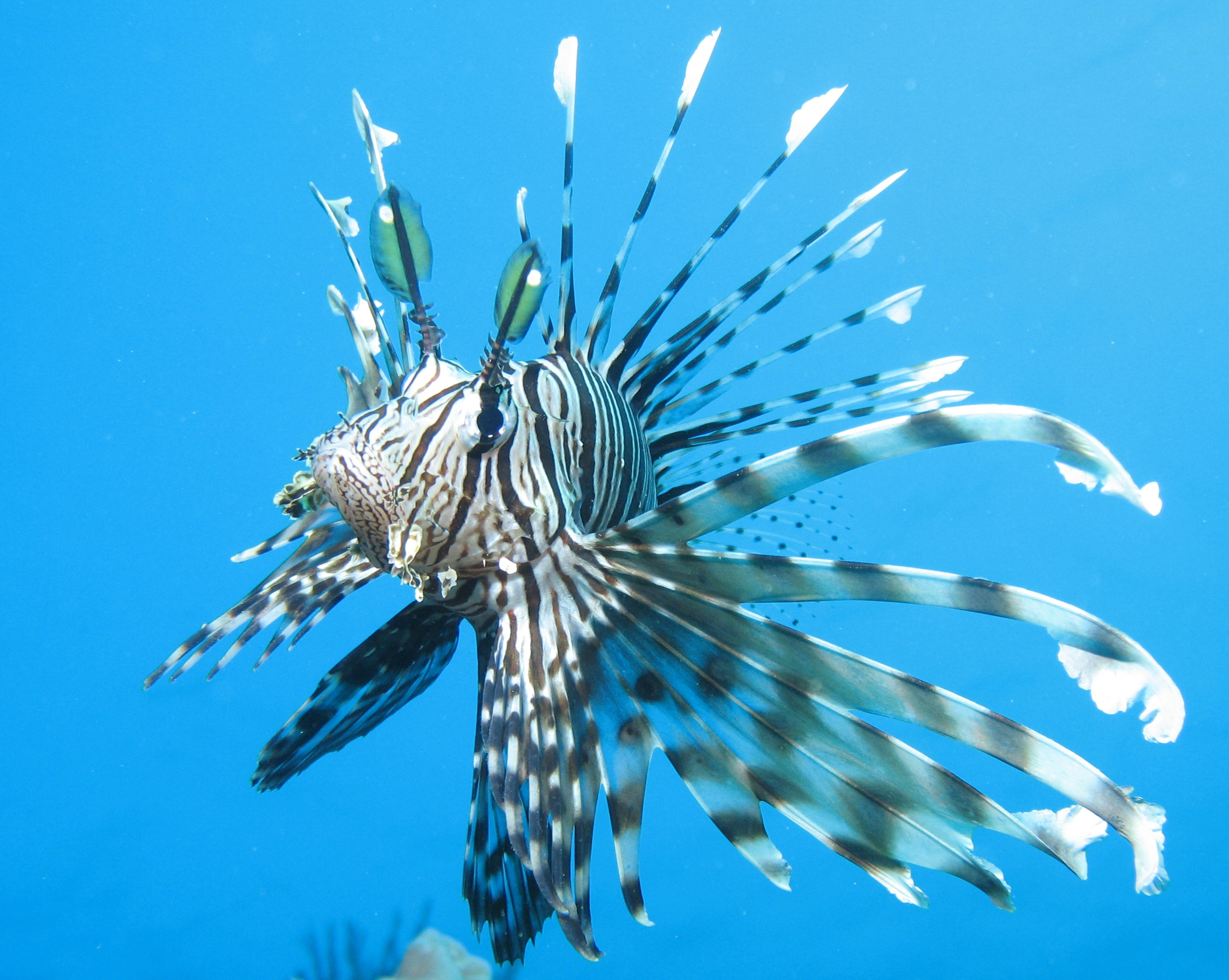 Lionfish for Creative fish names